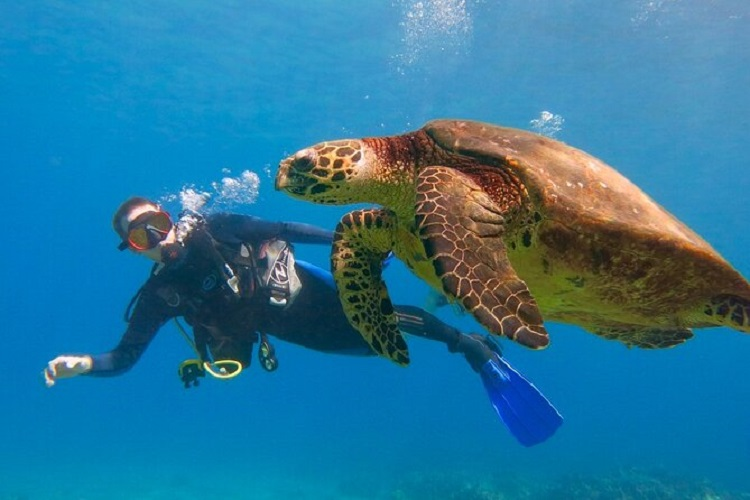 Discovering Some Best Spots to Get Your Scuba Diving 1